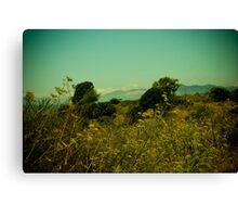 Fennel by the bay  Canvas Print