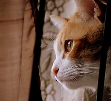 Cat harsis? Cat looking out the window by meowiyer