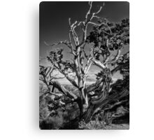 South Rim Grand Canyon Form Canvas Print