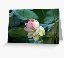 Sacred Lily or Lotus Lily Greeting Card