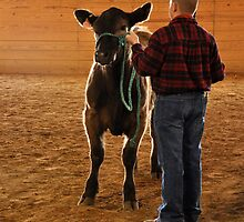 A Boy and Calf  by Amber Williams