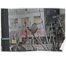 Bird in New York Poster