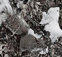 Squirrel by Ashley Salazar