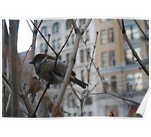 Bird in New York 2 Poster