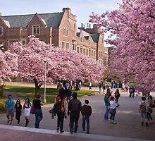 Walking on the UW Campus - First Day of Spring by Barb White