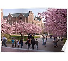 Walking on the UW Campus - First Day of Spring Poster