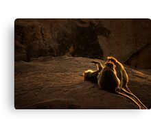Just Chill Out and Soak Up Those Rays, Guys!  Canvas Print