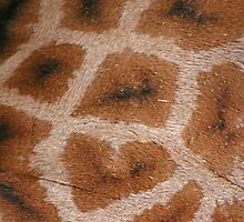 Natural Abstracts - Giraffe Hide by RedHillDigital
