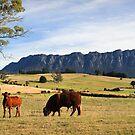 Rural Scenery- West Kentish,Tasmania by Tim Wootton