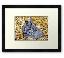 Grey Bunnies Framed Print