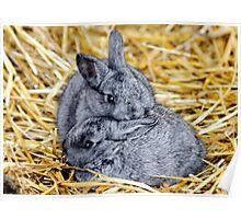 Grey Bunnies Poster