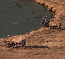 Pair Of Bull Elk by JL Woody Wooden