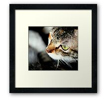 Stealth Ninja Cat Framed Print