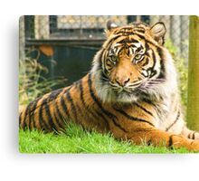 Magestic Tiger Canvas Print