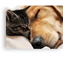 Cute Dog and cat Canvas Print