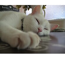 Lazy Louie Photographic Print