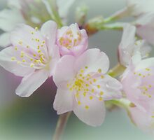 My love is blossoming by Yool