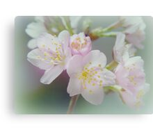 My love is blossoming Canvas Print