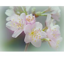 My love is blossoming Photographic Print