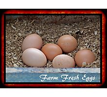 Farm Fresh Eggs Photographic Print
