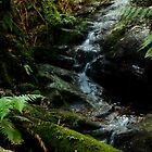 Tarra Bulga National Park by Erin Guest