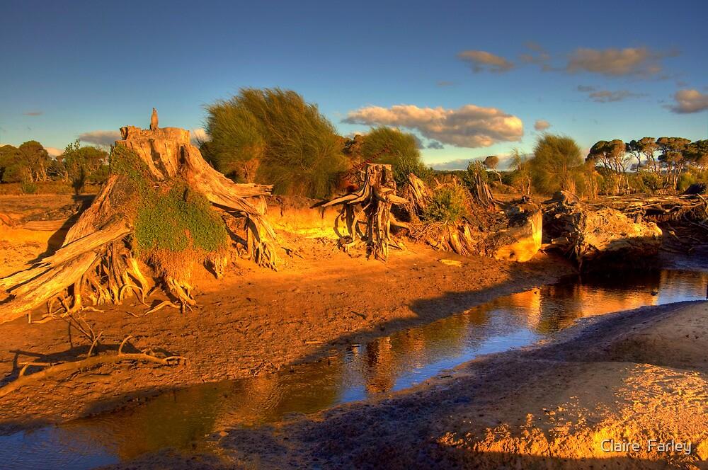Narawntapu National Park, Tasmania by Claire  Farley