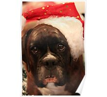 Season's Greetings - Boxer Dogs Series Poster