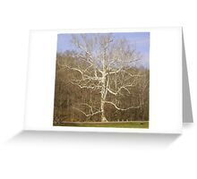 Taking Life in Stide Greeting Card