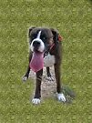 It's Definitely Too Hot For A Walk   -Boxer Dogs Series- by Evita