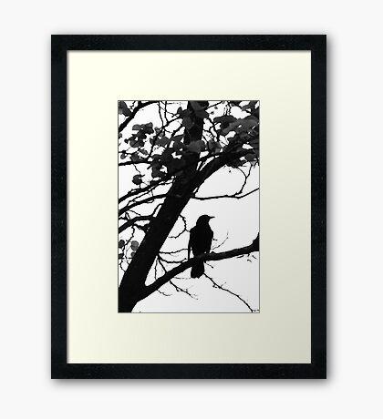 Blackbird on a branch Framed Print