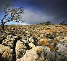 Yorkshire: Wild and Windy Moors by Angie Latham