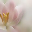 Touch of Pink by AnnieSnel