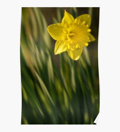 Daffodil 2 Poster