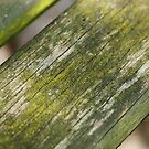 Moss on Wood by shane22