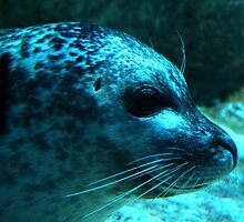 SEA LION by thula