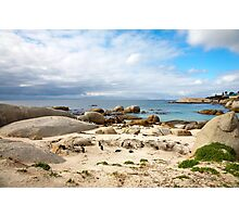 Boulders beach penguin colony Photographic Print