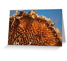 Sunflower Husk  Greeting Card