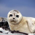 SEA LION BABY  by thula