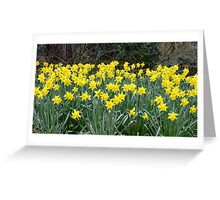 """"""" A touch of spring"""" Greeting Card"""
