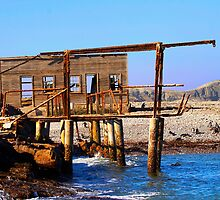 Ruin of whaling station on Halifax island. by Rudi Venter
