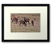 The Young Pretender Framed Print