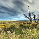Big sky Patagonia by rachosley