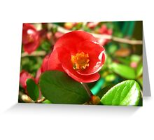 Flowering Quince II Greeting Card