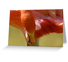 Flamingo charm Greeting Card