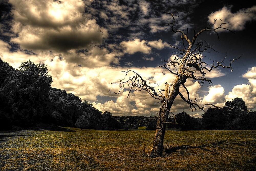 Old Tree, Bath, England. by garyfoto