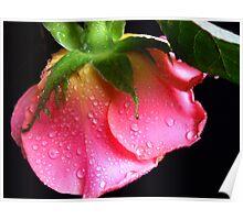 Pink Rose. Poster