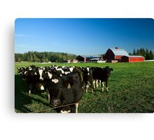 Dairy Cattle and Red Barn Canvas Print