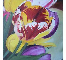 "Tulips - Oil on wood panel 12"" x 12""  Photographic Print"