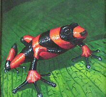 poison dart frog by Jesse Ross