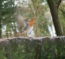 Robin on the run by Merice  Ewart-Marshall - LFA